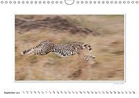 Emotional Moments: Big Cats of the World / UK-Version (Wall Calendar 2019 DIN A4 Landscape) - Produktdetailbild 9
