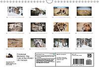 Emotional Moments: Big Cats of the World / UK-Version (Wall Calendar 2019 DIN A4 Landscape) - Produktdetailbild 13