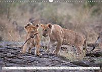 Emotional moments: Lovable lion cubs UK-Version (Wall Calendar 2019 DIN A3 Landscape) - Produktdetailbild 5
