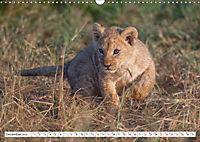 Emotional moments: Lovable lion cubs UK-Version (Wall Calendar 2019 DIN A3 Landscape) - Produktdetailbild 12