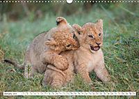 Emotional moments: Lovable lion cubs UK-Version (Wall Calendar 2019 DIN A3 Landscape) - Produktdetailbild 1