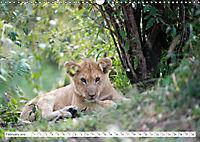 Emotional moments: Lovable lion cubs UK-Version (Wall Calendar 2019 DIN A3 Landscape) - Produktdetailbild 2