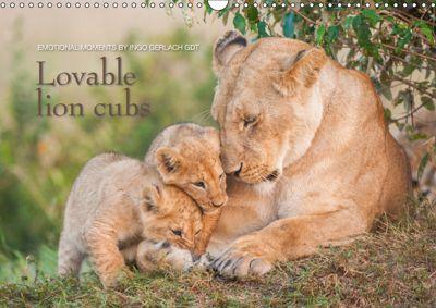 Emotional moments: Lovable lion cubs UK-Version (Wall Calendar 2019 DIN A3 Landscape), Ingo Gerlach GDT