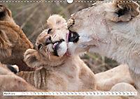 Emotional moments: Lovable lion cubs UK-Version (Wall Calendar 2019 DIN A3 Landscape) - Produktdetailbild 3