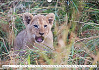 Emotional moments: Lovable lion cubs UK-Version (Wall Calendar 2019 DIN A3 Landscape) - Produktdetailbild 7