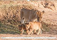 Emotional moments: Lovable lion cubs UK-Version (Wall Calendar 2019 DIN A3 Landscape) - Produktdetailbild 6
