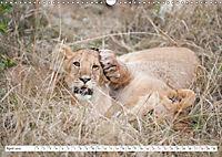 Emotional moments: Lovable lion cubs UK-Version (Wall Calendar 2019 DIN A3 Landscape) - Produktdetailbild 4