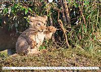 Emotional moments: Lovable lion cubs UK-Version (Wall Calendar 2019 DIN A3 Landscape) - Produktdetailbild 8