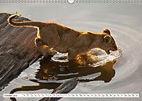 Emotional moments: Lovable lion cubs UK-Version (Wall Calendar 2019 DIN A3 Landscape) - Produktdetailbild 10