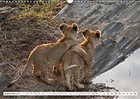 Emotional moments: Lovable lion cubs UK-Version (Wall Calendar 2019 DIN A3 Landscape) - Produktdetailbild 9