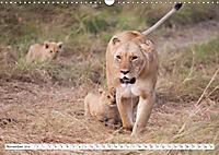 Emotional moments: Lovable lion cubs UK-Version (Wall Calendar 2019 DIN A3 Landscape) - Produktdetailbild 11