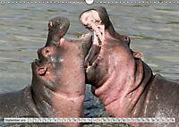 Emotional Moments: Lucky Hippo / UK-Version (Wall Calendar 2019 DIN A3 Landscape) - Produktdetailbild 9