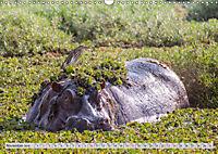 Emotional Moments: Lucky Hippo / UK-Version (Wall Calendar 2019 DIN A3 Landscape) - Produktdetailbild 11