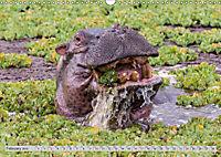 Emotional Moments: Lucky Hippo / UK-Version (Wall Calendar 2019 DIN A3 Landscape) - Produktdetailbild 2