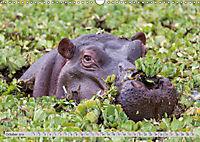 Emotional Moments: Lucky Hippo / UK-Version (Wall Calendar 2019 DIN A3 Landscape) - Produktdetailbild 10