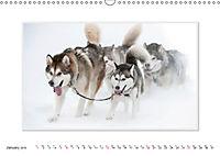 Emotional Moments: The Art of Huskys. UK-Version (Wall Calendar 2019 DIN A3 Landscape) - Produktdetailbild 1