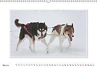 Emotional Moments: The Art of Huskys. UK-Version (Wall Calendar 2019 DIN A3 Landscape) - Produktdetailbild 5
