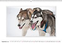 Emotional Moments: The Art of Huskys. UK-Version (Wall Calendar 2019 DIN A3 Landscape) - Produktdetailbild 9