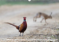 Emotional Moments: The pheasants. UK-Version (Wall Calendar 2019 DIN A3 Landscape) - Produktdetailbild 3