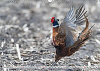 Emotional Moments: The pheasants. UK-Version (Wall Calendar 2019 DIN A3 Landscape) - Produktdetailbild 2