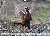 Emotional Moments: The pheasants. UK-Version (Wall Calendar 2019 DIN A3 Landscape) - Produktdetailbild 6