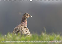 Emotional Moments: The pheasants. UK-Version (Wall Calendar 2019 DIN A3 Landscape) - Produktdetailbild 5