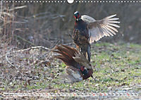 Emotional Moments: The pheasants. UK-Version (Wall Calendar 2019 DIN A3 Landscape) - Produktdetailbild 4