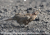 Emotional Moments: The pheasants. UK-Version (Wall Calendar 2019 DIN A3 Landscape) - Produktdetailbild 7