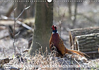 Emotional Moments: The pheasants. UK-Version (Wall Calendar 2019 DIN A3 Landscape) - Produktdetailbild 11