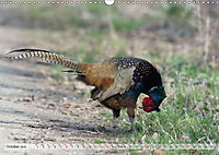 Emotional Moments: The pheasants. UK-Version (Wall Calendar 2019 DIN A3 Landscape) - Produktdetailbild 10