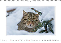 Emotional Moments: The Wildcat. UK-Version (Wall Calendar 2019 DIN A3 Landscape) - Produktdetailbild 1