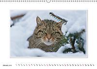 Emotional Moments: The Wildcat. UK-Version (Wall Calendar 2019 DIN A3 Landscape) - Produktdetailbild 1