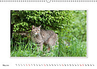 Emotional Moments: The Wildcat. UK-Version (Wall Calendar 2019 DIN A3 Landscape) - Produktdetailbild 5