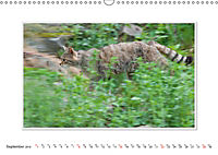 Emotional Moments: The Wildcat. UK-Version (Wall Calendar 2019 DIN A3 Landscape) - Produktdetailbild 9