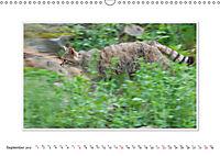 Emotional Moments: The Wildcat. UK-Version (Wall Calendar 2019 DIN A3 Landscape) - Produktdetailbild 9