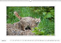 Emotional Moments: The Wildcat. UK-Version (Wall Calendar 2019 DIN A3 Landscape) - Produktdetailbild 6