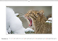 Emotional Moments: The Wildcat. UK-Version (Wall Calendar 2019 DIN A3 Landscape) - Produktdetailbild 11