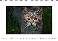 Emotional Moments: The Wildcat. UK-Version (Wall Calendar 2019 DIN A3 Landscape) - Produktdetailbild 10