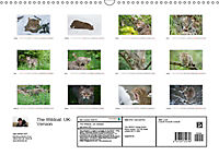 Emotional Moments: The Wildcat. UK-Version (Wall Calendar 2019 DIN A3 Landscape) - Produktdetailbild 13