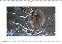Emotional Moments: The Wildcat. UK-Version (Wall Calendar 2019 DIN A3 Landscape) - Produktdetailbild 12