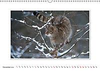 Emotional Moments: The Wildcat. UK-Version (Wall Calendar 2019 DIN A3 Landscape) - Produktdetailbild 12