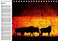 Emotionale Momente: African DreamsCH-Version (Tischkalender 2019 DIN A5 quer) - Produktdetailbild 5