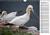 Emotionale Momente: Basstölpel (Wandkalender 2019 DIN A4 quer) - Produktdetailbild 9