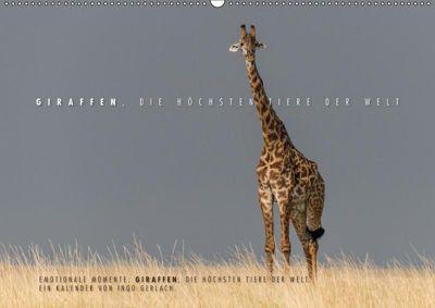 Emotionale Momente: Giraffen, die höchsten Tiere der Welt. (Wandkalender 2019 DIN A2 quer), Ingo Gerlach