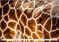 Emotionale Momente: Giraffen, die höchsten Tiere der Welt. (Wandkalender 2019 DIN A2 quer) - Produktdetailbild 7