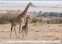 Emotionale Momente: Giraffen, die höchsten Tiere der Welt. (Wandkalender 2019 DIN A2 quer) - Produktdetailbild 9