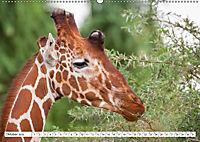 Emotionale Momente: Giraffen, die höchsten Tiere der Welt. (Wandkalender 2019 DIN A2 quer) - Produktdetailbild 10