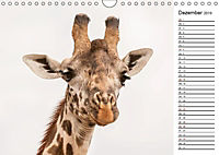 Emotionale Momente: Giraffen, die höchsten Tiere der Welt. (Wandkalender 2019 DIN A4 quer) - Produktdetailbild 12