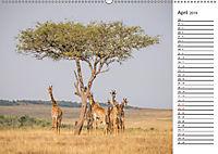 Emotionale Momente: Giraffen, die höchsten Tiere der Welt. (Wandkalender 2019 DIN A2 quer) - Produktdetailbild 4