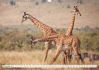 Emotionale Momente: Giraffen, die höchsten Tiere der Welt. (Wandkalender 2019 DIN A3 quer) - Produktdetailbild 11